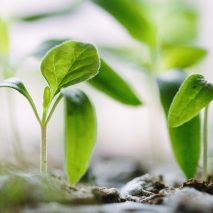 How to Implement a Growth Hack